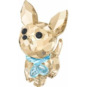 Swarovski Welpen – Oscar der Chihuahua
